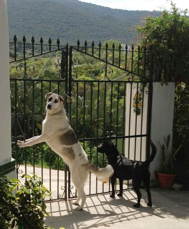 2 Vicious gate guarders